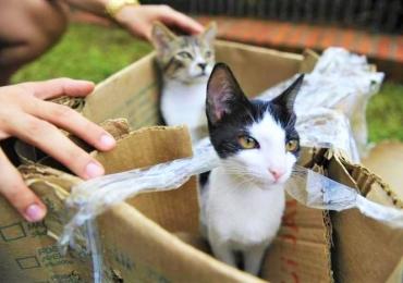 Eco Cats: projeto tem a venda de material reciclável revertida na castração de gatos abandonados em Goiânia