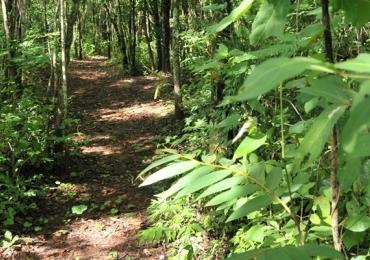 Parque Ecológico Altamiro de Moura Pacheco é opção de esporte, aventura, lazer e natureza exuberante em Goiânia