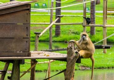 Zoológico de Goiânia é interditado devido a morte de macaco por febre amarela