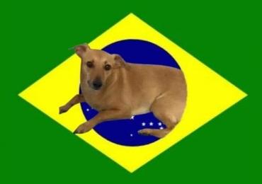 Este doguinho representa o Brasil mais do que samba, feijoada e futebol
