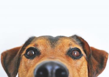 6 Lugares em Goiânia para quem quer adotar um animal de estimação