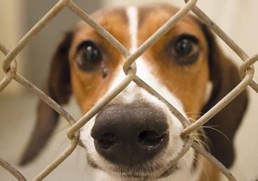 Evento para adoção de cães promove interação e vivência com animais