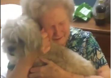 Neto surpreende avó deprimida com um novo cãozinho em vídeo emocionante