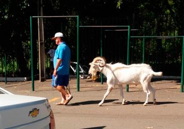 Homem é flagrado passeando com uma cabra em parque de Goiânia