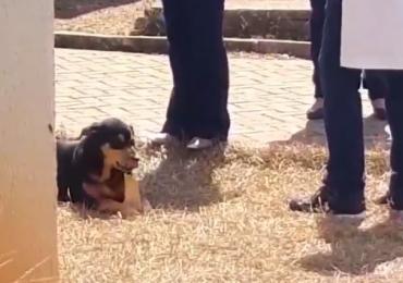 Cachorro furta osso do laboratório de anatomia da UFG e vídeo viraliza