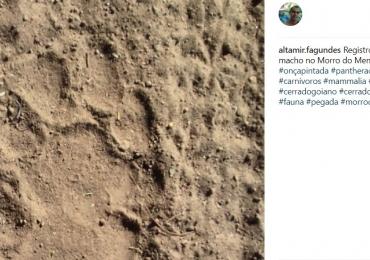 Morador encontra rastro de onça em Goiânia