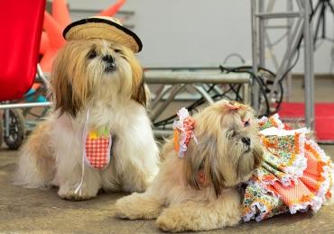 Festa Junina para cães tem desfile canino em Goiânia