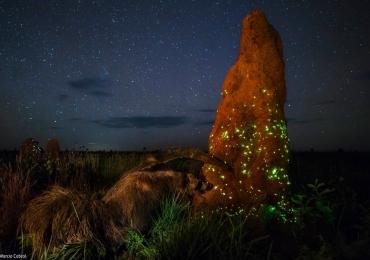 Fotografia tirada no Parque Nacional das Emas rende prêmio internacional a fotógrafo brasileiro