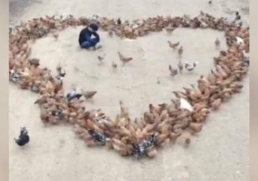 Jovem se declara para uma garota usando galinhas e vídeo viraliza na web