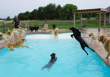 Onde hospedar seu cachorro ou gato enquanto viaja: listamos hotéis para animais em Goiânia