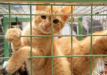 Shopping de Brasília promove feira de adoção de pets