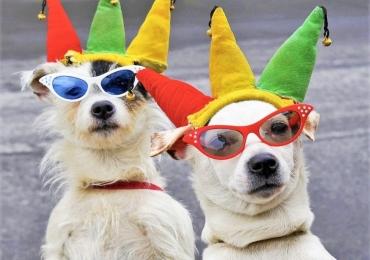 Carnavais Pet Friendly para levar o seu companheiro de quatro patas em Goiânia