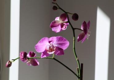 Brasília recebe exposição gratuita de orquídeas