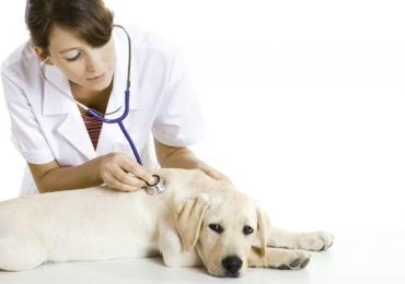 Aplicativo para atendimento veterinário domiciliar é lançado em Brasília