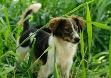 Cães e gatos podem ser adotados neste sábado em shopping de Goiânia