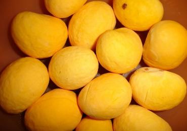 Tudo o que você provavelmente não sabia sobre a frutinha amarela que é a cara de Goiás