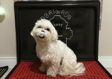 Brasileiros inventam 'banheiro autolimpante' que pode facilitar a vida de quem tem cachorro em apartamento