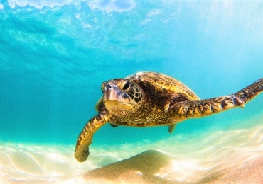 Baía das Tartarugas: Costa do Sauípe vai ganhar primeiro parque aquático totalmente inspirado na vida marinha da América Latina
