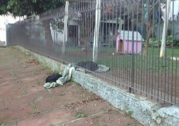 Cadela de estimação dá exemplo de generosidade e internet se derrete toda