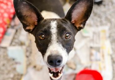 Goiânia celebra o Dia dos Animais com adoção de cães e gatos