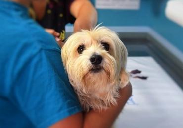 Sindicato Rural realiza cadastro para castração gratuita de cães e gatos em Uberlândia