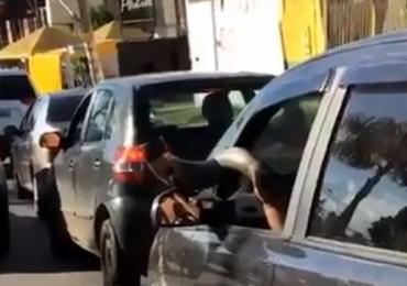 Vídeo flagra motorista usando berrante como buzina no trânsito em Goiânia