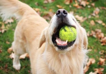5 atividades físicas para praticar com seu cachorro em Goiânia