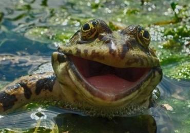 9 fotos de animais em cenas hilárias