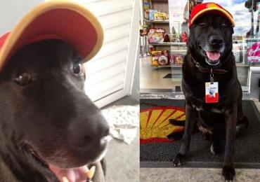 Cachorro 'Negão' é adotado e vira funcionário em posto de gasolina de SP