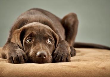 8 dicas para proteger seu cão dos fogos de artifícios