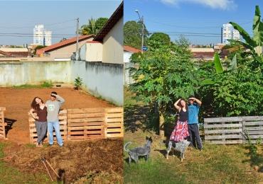 Produza 50 kg de alimentos orgânicos por mês no quintal da sua casa