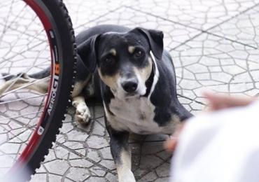 Cachorro comove internet ao esperar pelo dono que morreu na porta da Santa Casa de Goiânia