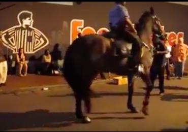 Cavalo da polícia rouba a cena quando começa a 'dançar'; veja