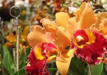 Belo Horizonte recebe Exposição Nacional de Orquídeas com entrada gratuita
