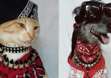 Goiânia recebe shows beneficentes de rock em prol dos animais