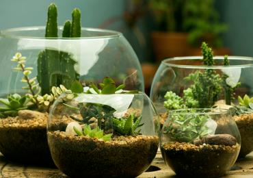 Muito utilizados para decoração, os biomas vêm em versõs simples ou mais sofisticadas
