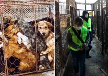 Maior matadouro de cães do mundo é fechado e transformado em parque público