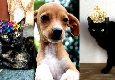 Feira para adoção de cães e gatos acontece neste final de semana no Estação Goiânia