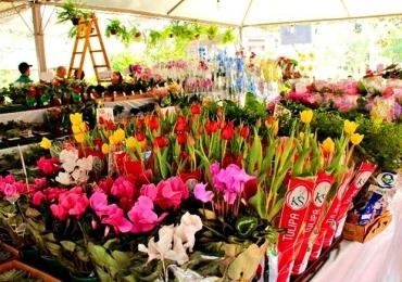 São mais de 150 espécies de flores e plantas ornamentais para exposição e comercialização