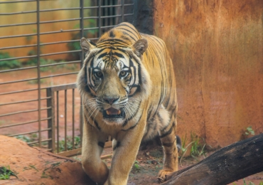 Passamos um dia inteiro no Zoológico de Goiânia e encontramos animais fantásticos por lá