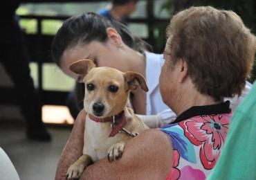 Goiânia terá campanha de vacinação gratuita contra raiva neste sábado | Cães e gatos poderão receber as doses em mais de 400 postos pela capital
