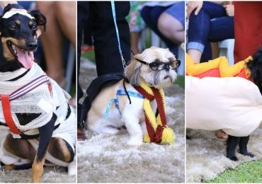 Veja as fantasias que encantaram no 1º Concurso Pet de Fantasias em Goiânia