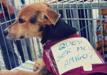10 instituições de proteção animal que precisam muito da sua ajuda em Goiânia