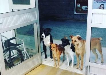 Morador de rua é internado e cães esperam na porta do hospital; confira