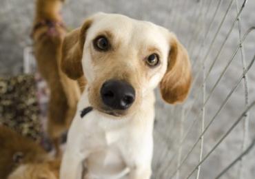Tinder para animais: Apps e sites conectam pets abandonados com pessoas interessadas em adotar