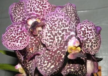 Orquidários em Goiânia para os apaixonados por flores