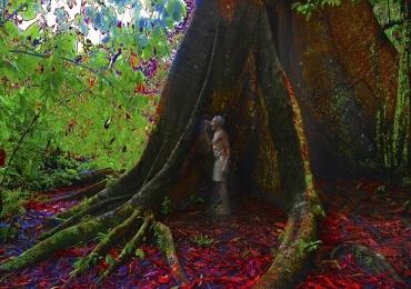 Exposição em Brasília reúne trabalhos com a temática da biodiversidade das florestas