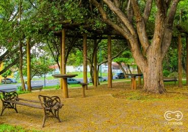 Outono começa nesta quarta-feira e traz algumas mudanças para a região central do país