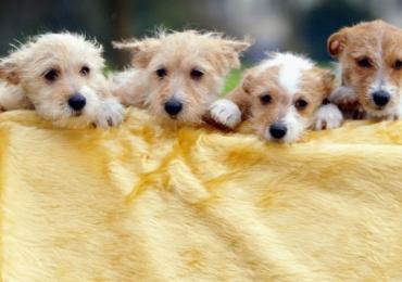 Venda de cães e gatos em pet shops é proibida no Reino Unido