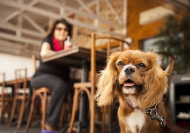 5 restaurantes pet friendly em Brasília